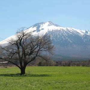 八幡平市 上坊牧野の一本桜