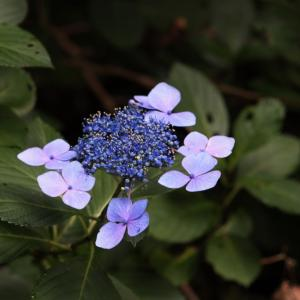 高尾山の花々 2