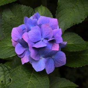 高尾山の花々 3