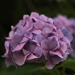 高尾山の花々 ラスト