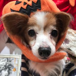 かぼちゃガール