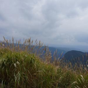ススキが揺れる尼ヶ岳