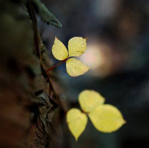 小さい秋を求めて