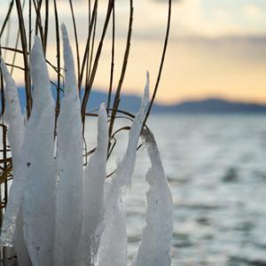 寒波の贈り物「しぶき氷」