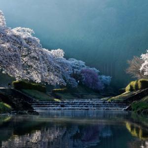 桜ぶらり旅