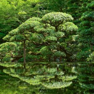 花梨のテーブルの映り込み「庭鏡」