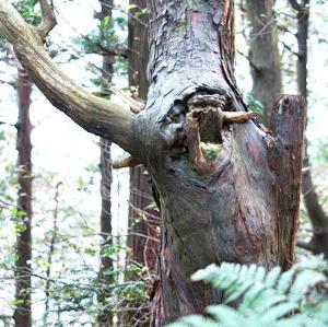 樹の節のオブジェ/三上山