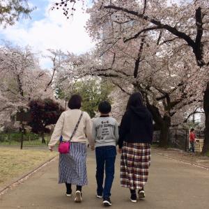 """""""桜を眺めてリフレッシュ"""""""