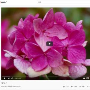 YouTube投稿動画「サライ」 視聴回数600万回突破