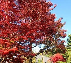 京都 高台寺の紅葉がキレイ
