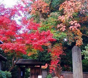 京都 圓徳院の紅葉がキレイ