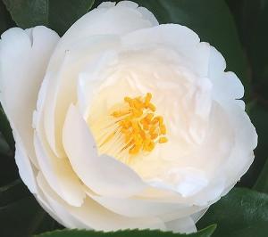 家の周りも様々な花で春の装いがキレイ