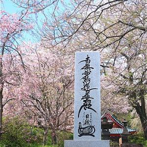 静岡富士宮市 興徳寺の桜がキレイ