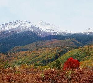 乗鞍高原 大カエデの紅葉がキレイ