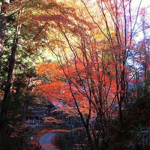 北茨城市 花園神社の紅葉がキレイ