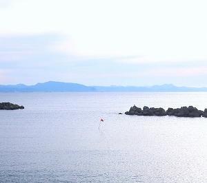 横須賀 野比海岸水仙ロードの水仙がキレイ