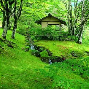 鹿沼市 古峯神社古峯園 苔の緑がキレイ