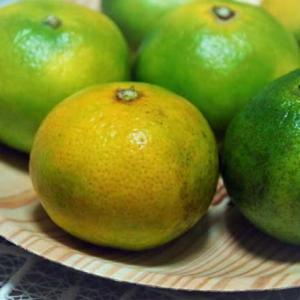 木工フルーツ皿