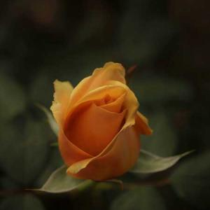 秋のバラまつり☆福岡市植物園