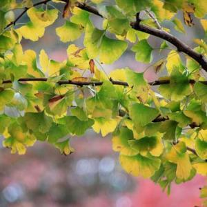 秋に浸って
