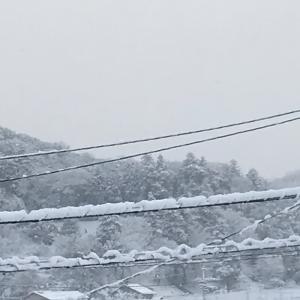 またも雪!