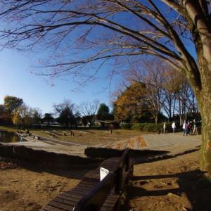 清瀬・金山緑地公園