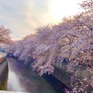 桜はまだ咲いてくれました