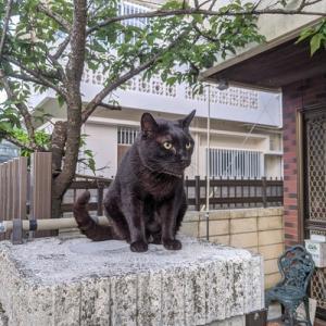我が家の門扉猫はぁ~