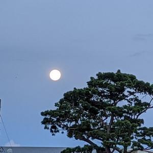 月がぁ出た出た 月がぁ出たぁ~♪