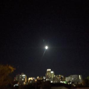 月はこんなにも綺麗なのに