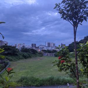 暑さと雨を避けながらの早朝散歩