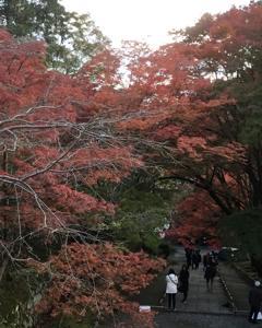 毘沙門堂の紅葉。