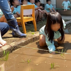 幼稚園で田植え。
