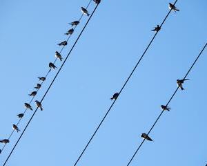 玄鳥去(つばめさる)・・・ツバメ旅立ちの時