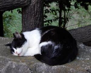 名古山ネコ・・・