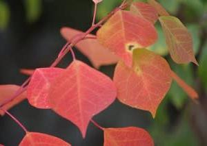 11月の庭2019・・・真っ赤に紅葉
