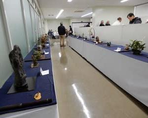 新春 水石展・・・石と小盆栽の飾り