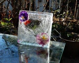 冬の花遊び・・・