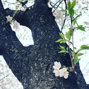 ◇六星ぷらすまいなす運気予報4/4【寅】のとき