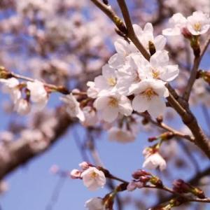 ◇六星ぷらすまいなす運気予報4/8はお釈迦様のお誕生日
