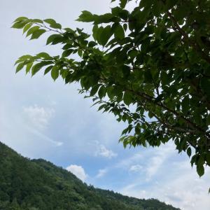 ◇六星ぷらすまいなす運気予報06/12【卯】のとき