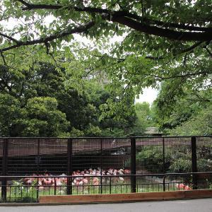 神戸市王子動物園に行ってみた Part.1