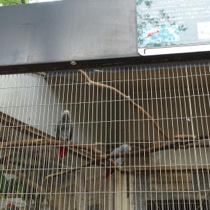 夢見ヶ崎動物公園のヨウムに会いに行ってみた (再)