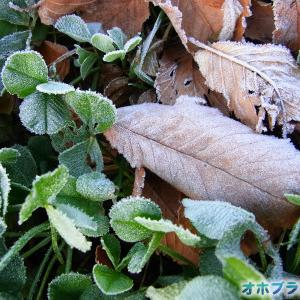 駐車場横で初霜発見!【サイトリニューアル準備中】