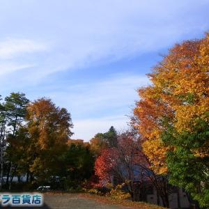 空はオホーツクブルーの青空と白い秋雲、足元は落ち葉だらけの北見です【ショップきたみさん!】玉ねぎ・じゃがいも・3種のレトルトカレーをご案内中