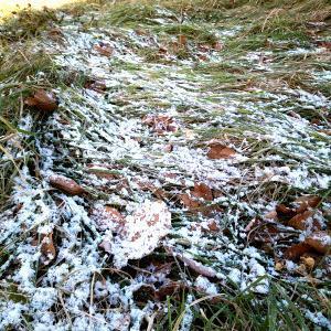 週間予報から雪マークが消えた北見です【ショップきたみさん!】玉ねぎ・じゃがいも・3種のレトルトカレーをご案内中