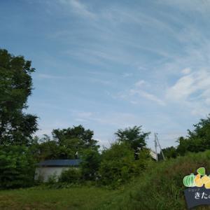 今日の北見、35℃の猛暑日の予報Σ(゚д゚lll)ガーン