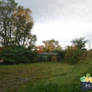 朝は曇っていましたが、今は晴れてる北見です(^^)