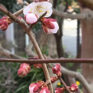 我家の庭に花が咲き始めました~♪