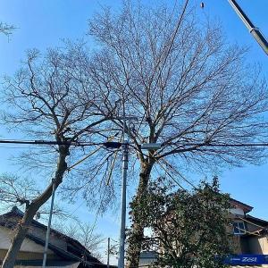 想い出の木々